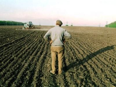 Для армянских фермеров – новый удобный способ торговать в Москве: Интервью